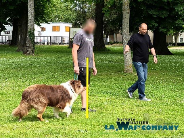 Éducation | LA WAF COMPANY ® - Sylvain WUATTIER, éducateur canin
