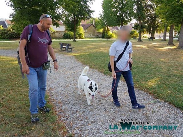 Cours d'éducation | LA WAF COMPANY ® - Sylvain WUATTIER, éducateur canin