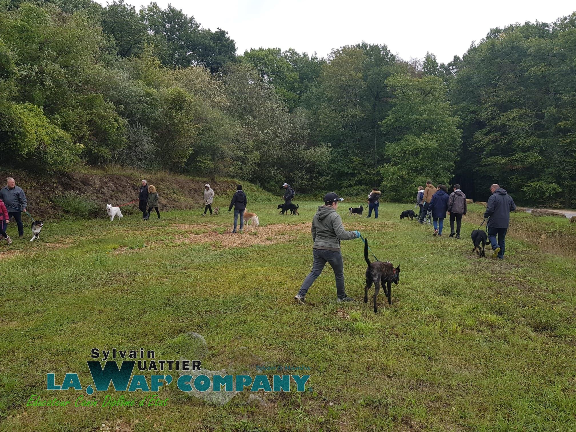 Promenade éducative collective | LA WAF COMPANY ® - Sylvain WUATTIER, éducateur canin
