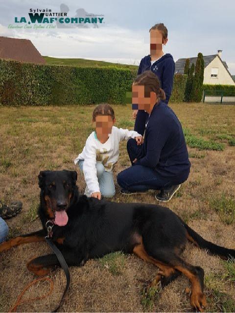 Stage peur des chiens | LA WAF COMPANY ® - Sylvain WUATTIER, éducateur canin