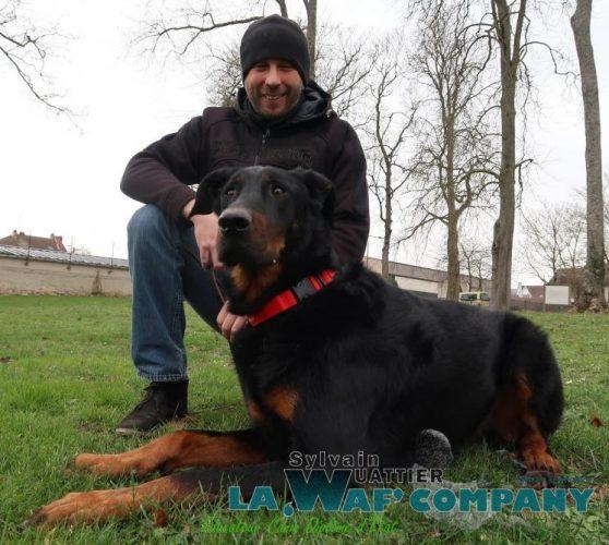 LA WAF COMPANY ® - Sylvain WUATTIER, éducateur canin