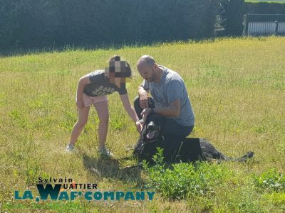 Cynophobie | LA WAF COMPANY ® - Sylvain WUATTIER, éducateur canin