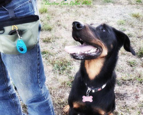 Bien utiliser le clicker | LA WAF COMPANY ® - Sylvain WUATTIER, éducateur canin