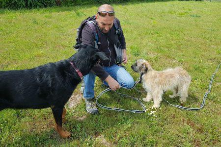 Cours individuel collectif | LA WAF COMPANY ® - Sylvain WUATTIER, éducateur canin